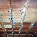Palang Kayu Dibuat Untuk Memberikan Ruang Burung Walit Membuat Sarang