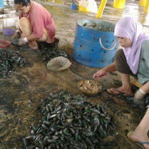 5. Proses Membuang Cengkeram Atau Mengopek Kulit Kupang Dilakukan Dengan Bantuan Pekerja Wanita