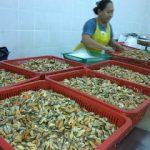 8. Proses Pengreda Mencuci Dan Timbang Berat Isi Kupang Sebelum Dipasarkan