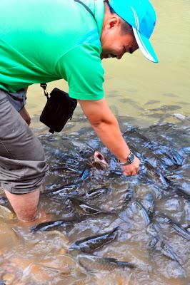 Ikan Dalam Sistem Tagal Ini Boleh Disentuh Kerana Tiada Unsur Ancaman