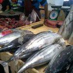 Ikan Tuna Pasar Semporna