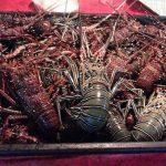Lobster Pasar Semporna Sabah