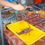 Lobster Segar Kota Kinabalu