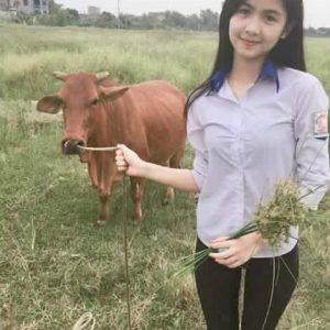 Gadis Cantik Dengan Lembu