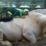 Gambar perempuan dan lembu kesayangannya.