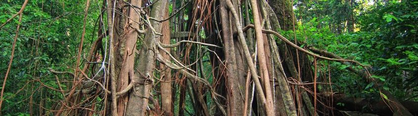 Hutan Belantara Bukan Tempat Kita Ia Harus Dimulakan Dengan Niat Yang Baik
