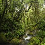 Hutan Tebal