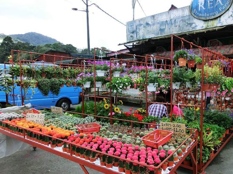 Kea Farm Brinchang