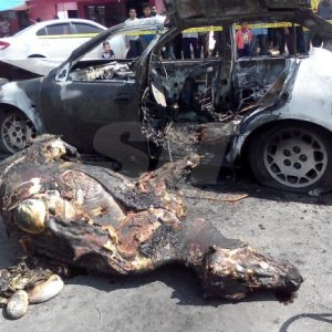 Pencuri lembu terlibat dalam kemalangan.