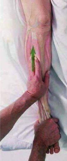 Cara Urutan Betis Hingga Ke Lutut