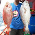 Ikan Mandi Abu Dan Ikan Merah