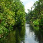 Kawasan Paya Dan Tasik Dalam Hutan