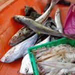 Pancing Ikan Dengan Bot 38
