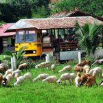 Pengunjung Menaiki Bas Menjelajah Sekitar Uk Farm Resort Kluang Johor