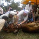 Sultan Kelantan Melakukan Ibadat Korban