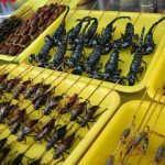 Makanan Eksostik Serangga