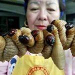 Makanan Eksostik Ulat Sagu