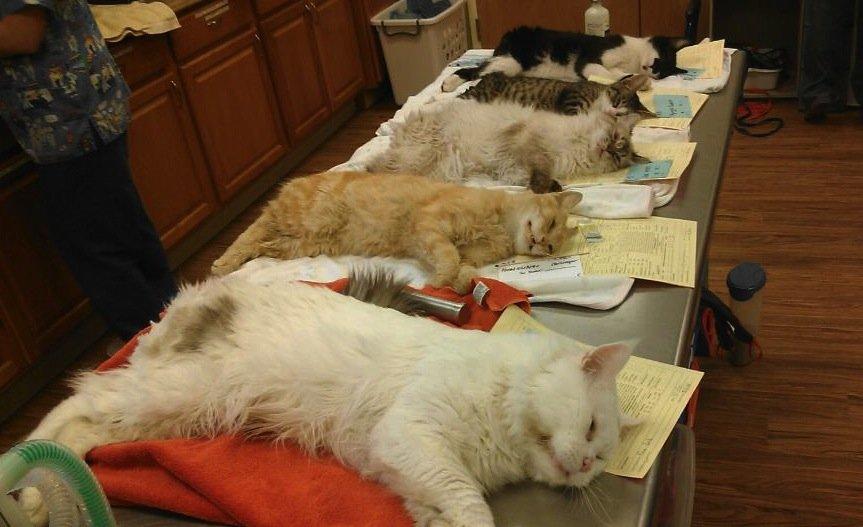 Этот препарат можно подобрать котятам, как только начали симптомы заболевания, начиная с 2