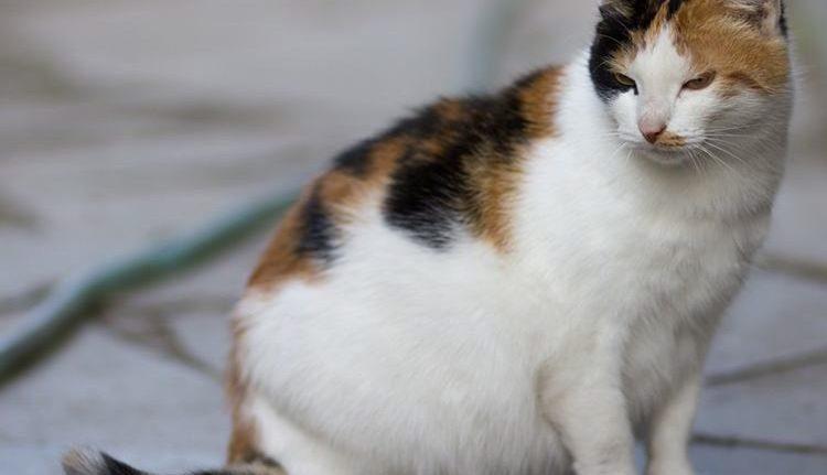 Ketahui Tanda Kucing Akan Melahirkan Anak