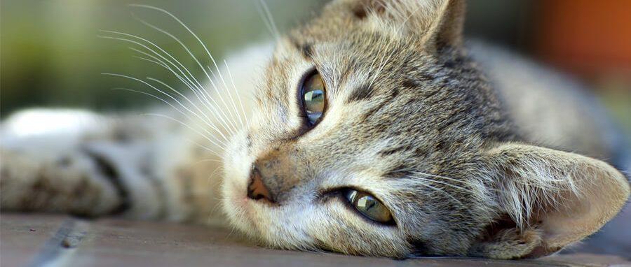 Tanda Awal Kucing Sakit
