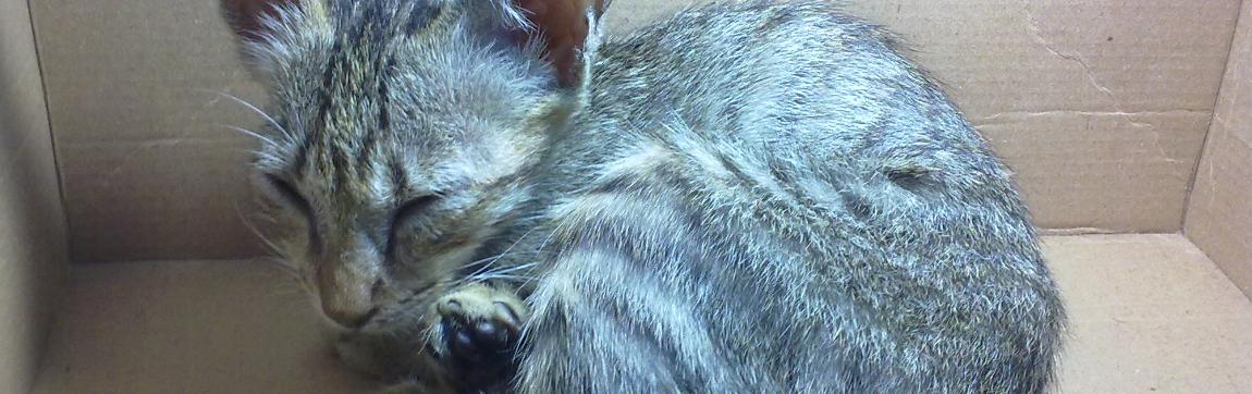 Tanda Awal Kucing Terkena Cacing