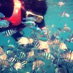 Underwater Perhentian Island