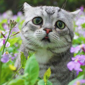 Funny Cat Luhu