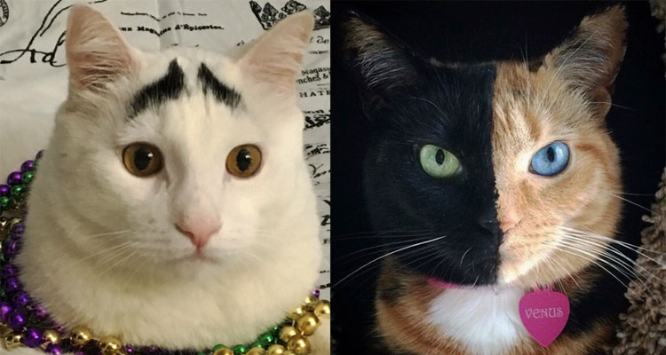 Kucing Popular Instagram
