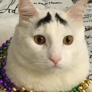Sam Cat