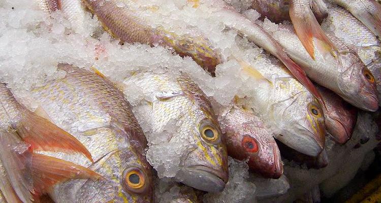 Tips Simpan Ikan Dalam Peti Sejuk