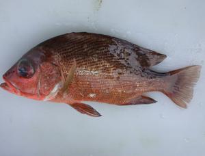 Turbidity Of The Fish Skin