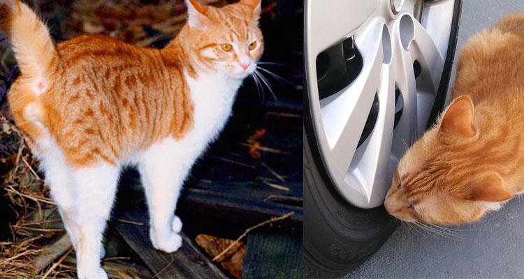 Cara Menghalau Kucing Liar Daripada Kencing Di Tayar Kereta Anda