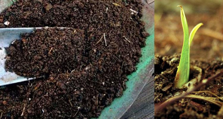 Kaedah Membuat Baja Kompos Menggunakan Sisa Dapur Untuk Tanaman Anda