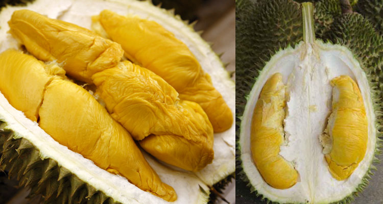 Musim Durian & Jenis Jenis Durian Di Malaysia!