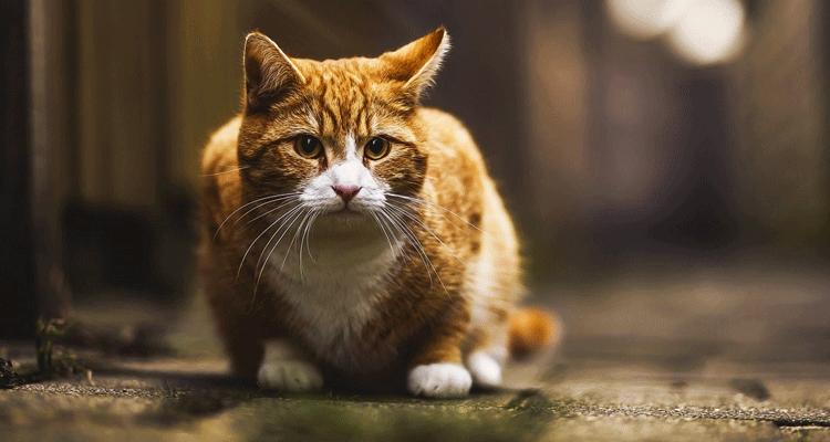 Tanda Tanda Kebaikan Bakal Anda Perolehi Jika Didatangi Kucing Jalanan