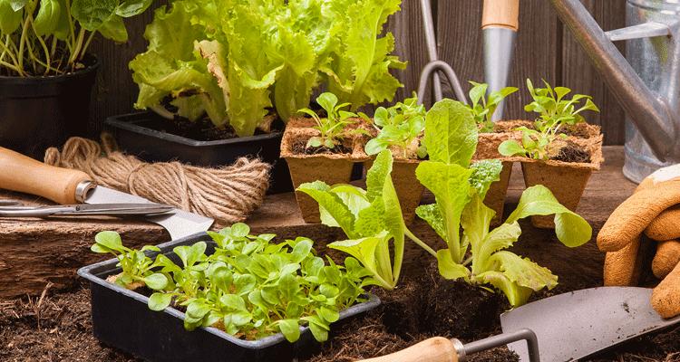 Tips Menanam Sayur Dalam Ruang Sempit
