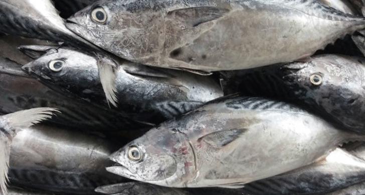 Permalink to 10 Resepi Masakan Ikan Tongkol Popular Boleh Anda Cuba!
