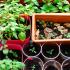 10 Teknik Penanaman Sayur Di Ruang Sempit. Teknik Berkebun Ini Boleh Anda Cuba!