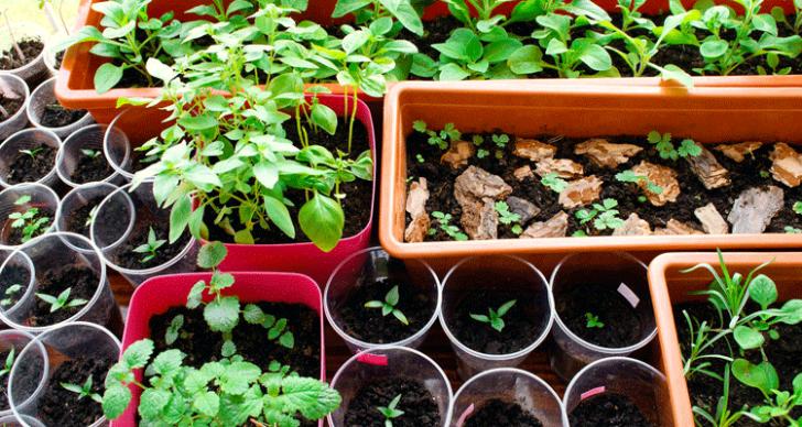 Permalink to 10 Teknik Penanaman Sayur Di Ruang Sempit. Teknik Berkebun Ini Boleh Anda Cuba!