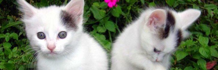Permalink to Ketahui Empat Jenis Kucing Kampung Dan Tabiatnya