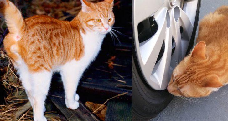 Permalink to Petua Halau Kucing Liar Daripada Kencing Di Tayar Kereta Anda!
