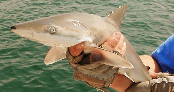 Permalink to Ketahui Jenis Ikan Yu Yang Ditangkap Di Perairan Semenanjung Malaysia