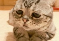 Luhu Cat