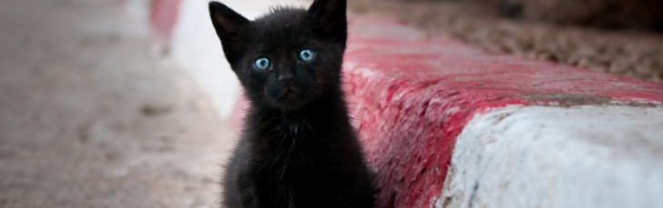 Permalink to Cara Memelihara Anak Kucing Terbiar
