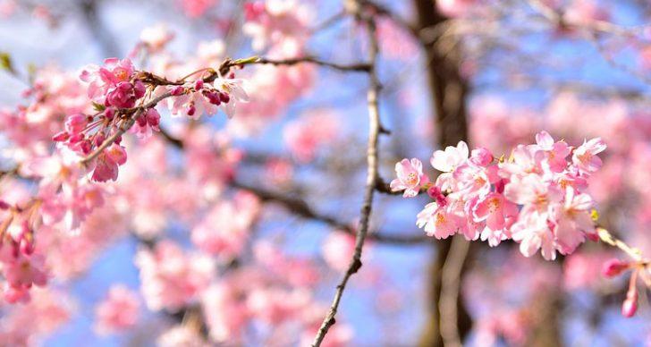 Permalink to Selain Jepun, Anda Juga Boleh Nikmati Bunga Sakura Di Lima Negara Ini!