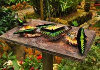 Butterflies Garden CH