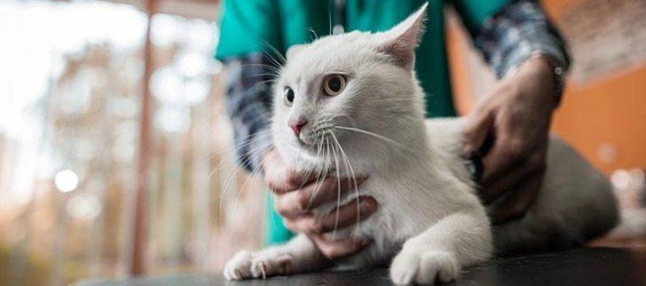 Permalink to Kenapa Perlu Memberi Ubat Cacing Pada Kucing Anda?