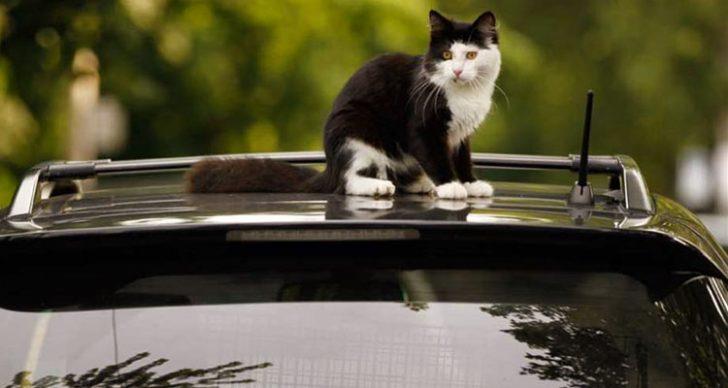 Permalink to Petua Menjadi Elak Kucing Dari Tidur Atas Kereta, Motosikal Anda!