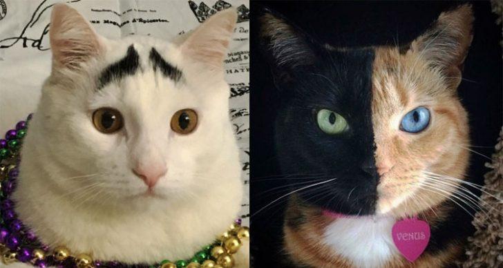 Permalink to 5 Kucing Ini Popular Di Media Sosial Kerana Miliki Keunikan Tersendiri