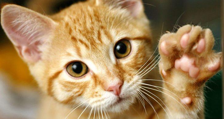 Permalink to 5 Perkara Menarik Tentang Kucing Yang Hanya Difahami Oleh Pemiliknya Sahaja!